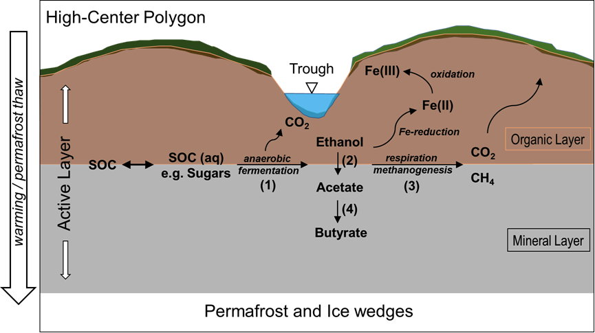 Uncovering labile soil organic matter degradation pathways for Soil biology and biochemistry